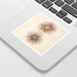 Naturalist Sea Urchins Sticker
