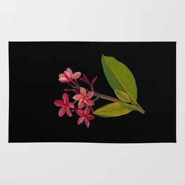 Plumeria Rubra Mary Delany Floral Paper Collage Delicate Vintage Flowers Rug