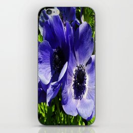 Two Blue Mauve Anemone - Close Up Windflowers  iPhone Skin