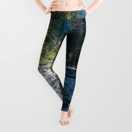 Fall Trees Photography Print Leggings