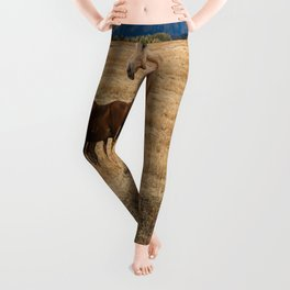 Mountain Horse - Western Style in the Grand Tetons Leggings