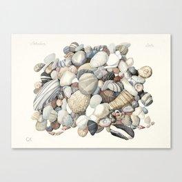 Sea shore of Crete Canvas Print