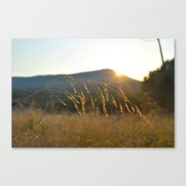 wheat grass  Canvas Print