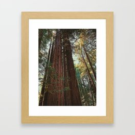 Redwood Trees Framed Art Print