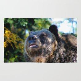 sunny bear Rug