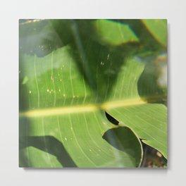 Bird of Paradise Leaf Metal Print