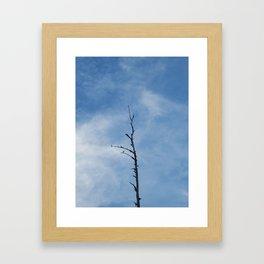 solo Framed Art Print
