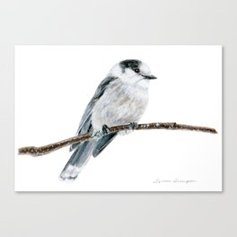 Gray Jay by Teresa Thompson Canvas Print