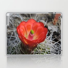 Red Blossom on a Hedgehog Cactus Laptop & iPad Skin
