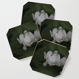 Flower Garden XXXIV Coaster