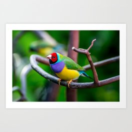 Nature's Amazing Colors Art Print