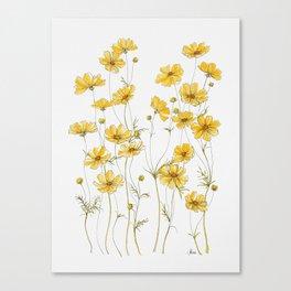 Yellow Cosmos Flowers Canvas Print