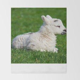 A Sleepy Newborn Lamb In A Field Throw Blanket
