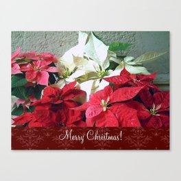 Mixed color Poinsettias 3 Merry Christmas S5F1 Canvas Print