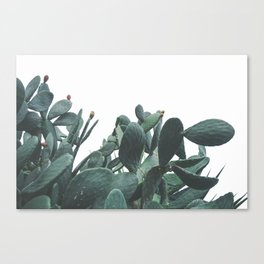 Fruit Cactus Desert Canvas Print