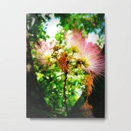Mimosa Flower Metal Print