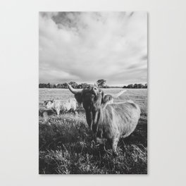 Black and White Highland Cow - Moo Canvas Print