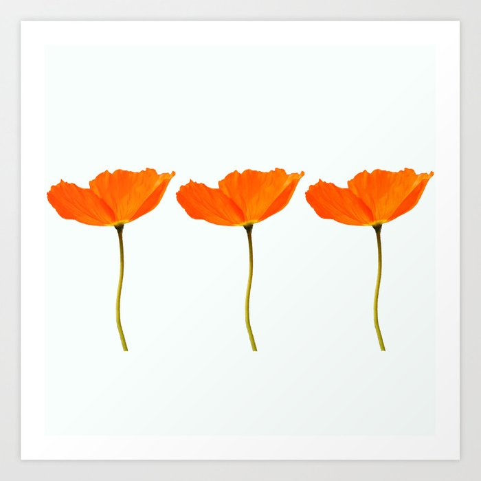 Three orange poppy flowers white background decor society6 buyart three orange poppy flowers white background decor society6 buyart art print by pivivikstrm society6 mightylinksfo