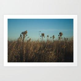 In the Wind Art Print