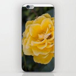 Rose Garden Six (with bonus friend) iPhone Skin