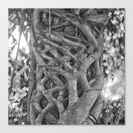 Tangled strangler fig Canvas Print