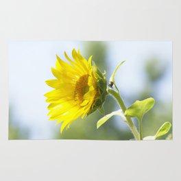 Ladybug and it's Sunflower Rug