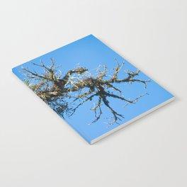 Treehuggers Notebook