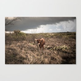 Stare Down - A Texas Bull in the Mesquite and Cactus Canvas Print