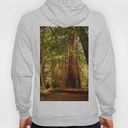 Muir Woods Walkway Hoody