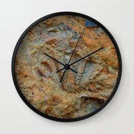 Shell Fossil Wall Clock