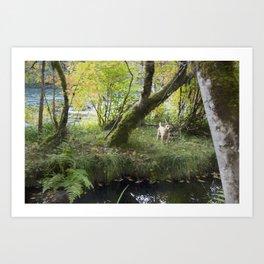 Maisie at the Pond Art Print
