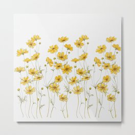 Yellow Cosmos Flowers Metal Print