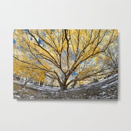 Gorgeous Big Tree Metal Print