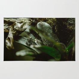 Froggie Rug