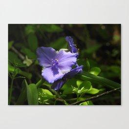 Spiderwort in Sunlight Canvas Print