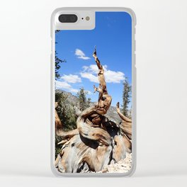 Ancient bristlecone tree Clear iPhone Case
