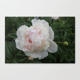 Romantic Peony Canvas Print