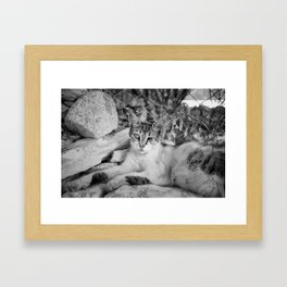 One eyed Framed Art Print