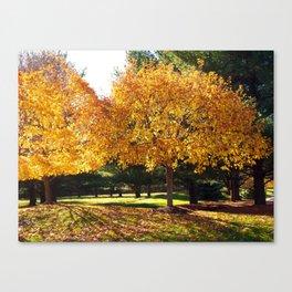 Fall Trees in Sun Light Canvas Print
