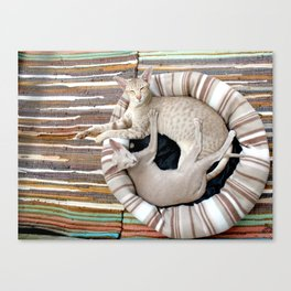 Cats duo Canvas Print