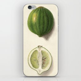 Vintage Illustration of a Lime iPhone Skin