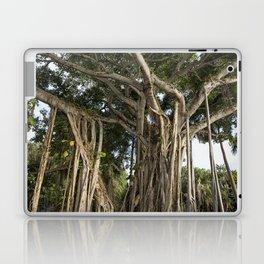 Banyan Tree at Bonnet House Laptop & iPad Skin