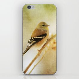 American Gold Finch iPhone Skin