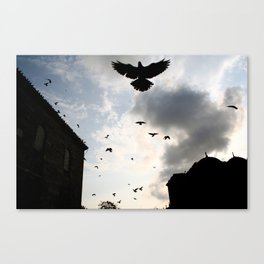Scattered Birds, Istanbul Canvas Print