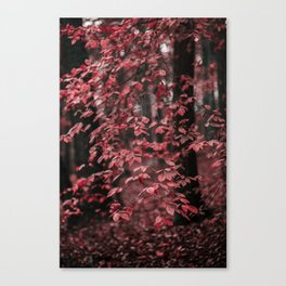 Red Leaves 2 Canvas Print