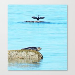 Seal pup and Cormorant getting some Sun  Canvas Print