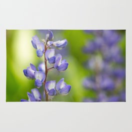 Yellowstone National Park - Silver Lupine Rug
