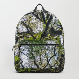Centenary oak with the trunk covered in moss and green plants Backpack