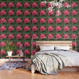 """A Rose Named """"Neil Diamond"""" Wallpaper"""