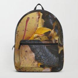 Fall Tort Backpack